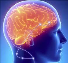 Brainbooster pret